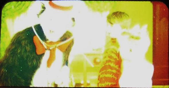 Costume da gatto in film anni risolto memocinema